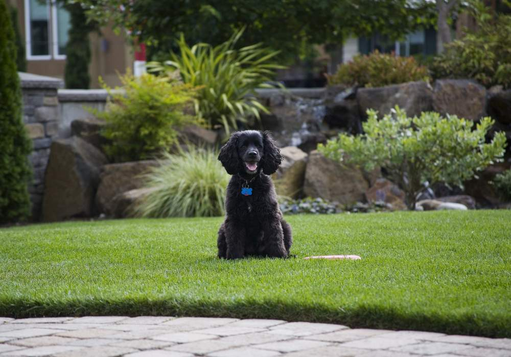 Dog Friendly Backyard Makeover :  ~ Win 1 Of 3 $5,000 Pet Friendly Backyard Makeovers!  FruGals